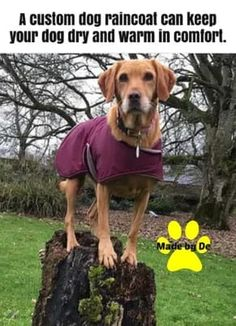 No matter what type of dog coat you get, if it's made well, it should last for years of use. Waterproof Dog Coats, Waterproof Fabric, Dog Smells, Dog Winter Coat, Dog Raincoat, Types Of Dogs, Shades Of Blue, Life Is Good, Fit