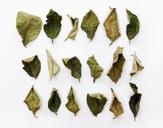 gradations of green  (mary jo hoffman)