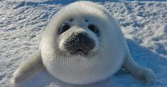 Baby seal says hi!
