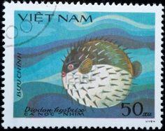 Vietnam: diodon hystrix - (peixe balão)