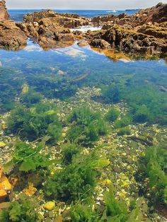Tidepools along the shoreline near Cape Town South Africa. Cape Town, South Afrika, Garden Route, Tide Pools, Rock Pools, Going Natural, Most Beautiful Cities, Seaweed, Dream Vacations