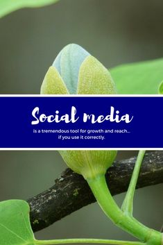 Social media is a tremendous tool for growth and reach.if you use it correctly. Social Media, Business, Store, Social Networks