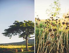 """""""Day After"""" Maui Wedding Photos - Inspired By This-magnificent maui!"""