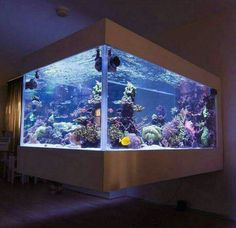 ;-)~❤~ Saltwater Aquarium Fish, Home Aquarium, Aquarium Design, Saltwater Tank, Reef Aquarium, Saltwater Fishing, Cool Fish Tanks, Tropical Fish Tanks, Fish Tank Design