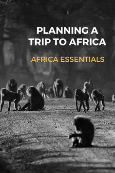Travel Guide Africa | Tips for Planning a Trip to Africa