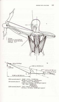 """Scanned from """"Archery anatomy"""" showing posture of shoulder being hunched down during pre-release stage. Archery Poses, Archery Lessons, Archery Tips, Best Recurve Bow, Recurve Bows, Compound Bow Parts, Bow Hunting Tips, How To Drow, Bow Drawing"""