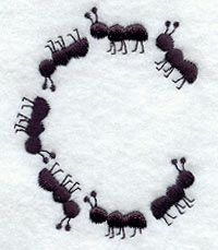 The ants going marChing