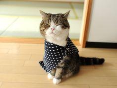 そしてじゃーん! ステキお洋服。 And it is wonderful clothes!