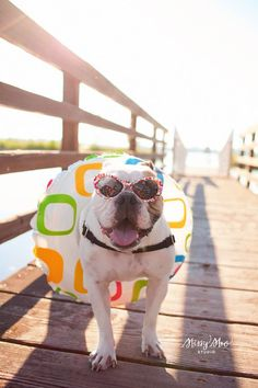 Bullie on a boardwalk / Bulldog / Beach Photo Session Idea / Prop Ideas / Puppy . - Bullie on a boardwalk / Bulldog / Beach Photo Session Idea / Prop Ideas / Puppy / Dog Portraits / P - Pet Dogs, Dogs And Puppies, Pets, Doggies, Dog Photos, Dog Pictures, Photo Summer, Dog Calendar, Summer Dog