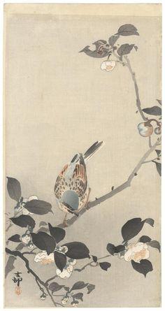 Ohara Koson - Ohara Koson Original Japanese Woodblock Print Camelia Bird Ukiyo-e Spring Japanese Bird, Japanese Prints, Japanese Textiles, Chinese Painting, Chinese Art, Chinese Brush, Ohara Koson, Art Chinois, Japan Painting