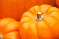 When to Plant Pumpkin Seeds