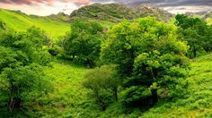 Green Landscape wallpaper x Tree Wallpaper Backgrounds, Nature Wallpaper, Wallpapers, Green Landscape, Mountain Landscape, World Of Warcraft Gold, Summer Trees, Sky Mountain, Landscape Wallpaper