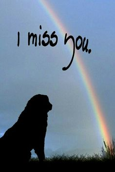 The Rainbow Bridge is a classic poem about cat and doggie heaven, written to bring comfort and peace to the heart of a person experiencing the pain of pet loss grief. Animal Quotes, Dog Quotes, Humor Quotes, I Love Dogs, Puppy Love, Animals And Pets, Cute Animals, Miss My Dog, Pet Loss Grief