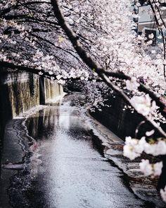 "Polubienia: 1,605, komentarze: 30 – marta śliwicka (@sliwkamarta) na Instagramie: ""Naka-meguro was our absolutely favourite spot in Tokyo. These little streets, little shops and…"""
