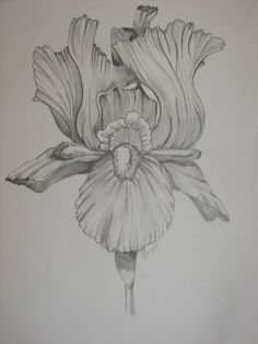 Iris Flower Tattoo Drawing   visit almostperfectwithafewsplotches blogspot com
