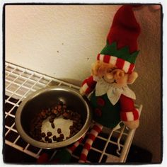 11/30/12 Elf says Horrors! Kitties' bowl is empty!