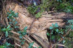 Uutta ja vanhaa... Plants, Plant, Planets