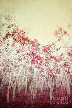 The Red Forest by Priska Wettstein Photograph