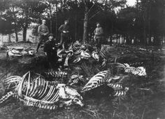 circa 1917: German soldiers uncover horse skeletons in a wood near Slaviski in Poland. (Photo by Hulton Archive/Getty Images)