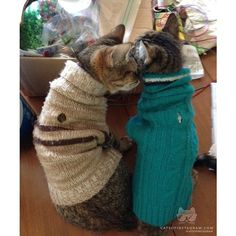 "From @annacombrink: ""My kitten Dallas (tan sweater) got..."