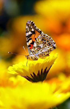 The best butterfly photos, 30 the most beautiful butterflies