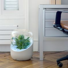 First plant based air purifier cool beans