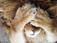 I don't see you so your not there. I love lions!
