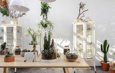 Epicentro fills São Paulo flower shop with vintage furniture