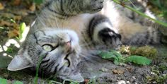 Tipps für gelungene Tierfotos Tier Fotos, Cats, Animals, Inspiration, Animal Photography, Dots, Pet Pictures, Animales, Biblical Inspiration
