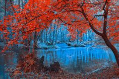 """ Dream "" by SejmenovicMevludin #nature #photooftheday #amazing #picoftheday #sea #underwater"