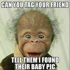 Animals Discover Lol but he& so cute Smiling Animals Happy Animals Cute Funny Animals Cute Baby Animals Funny Cute Animals And Pets Cute Animal Pictures Funny Pictures Hello Pictures Cute Little Animals, Cute Funny Animals, Funny Cute, Cute Dogs, Cute Babies, Smiling Animals, Happy Animals, Ugly Animals, Cute Animal Pictures