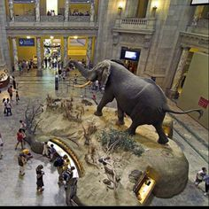 Museum of Natural History - New York City, NY #Yuggler #KidsActivities