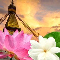 Tibetian Amber Fragrance Oil  @naturesgarden, #fragranceoils, #scents, #naturesgarden, #soapmakingsupplies, #lotionmakingsupplies, #candlemakingsupplies, #cosmeticsupplies, #wholesale, #candlescents, #soapscents, #craftsupplies, #diy, #craftsupplies
