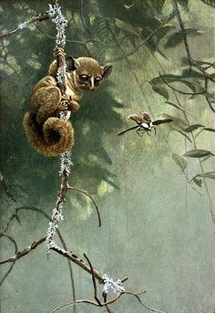 12x 18 Demidov's Galago Robert Bateman - Paintings