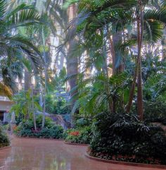 Tropical Rainforest at The Mirage