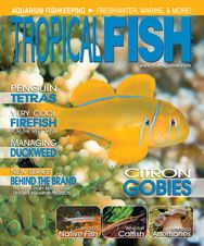 The March 2011 issue has a range of articles from collecting fish native to the United States to adding firefish to a reef tank, keeping whiptail catfish, caring for penguin tetras, and much more!