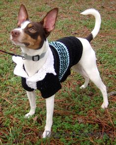 A Dog In A Sweater: Polo Sweater. Free Crochet Pattern, custom-fit to your dog.