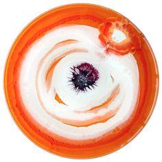 petri-dish-painting-klari-reis-15