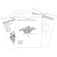 174 best Free Printable Worksheets images on Pinterest in