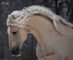 think manes make easy and stylish french braids