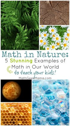 Do your kids notice math in the world around them? Do you wish they saw the beauty and importance of math in our everyday life? Here are 5 amazing examples of ways we see math in the natural world that you can teach and explore with your kids! Maths In Nature, Nature Activities, Math Activities, Outdoor Activities, Math Worksheets, Math Resources, Outdoor Education, Outdoor Learning, Kids Learning