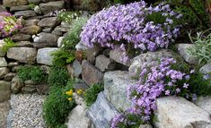 Das Alpinarium ist eine Sonderform des Steingartens: In den mageren Böden zwischen wärmespeichernden Steinen und Findlingen werden bevorzugt alpine Pflanzen kultiviert, die im heimischen Garten einen besonders zeitvollen Blickfang abgeben. Wie man ein Stein-Alpinarium anlegt, verraten wir dir.