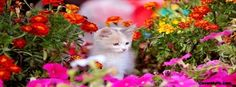 Cute Kitten in Flowerbed Facebook Cover