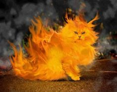 funny cat Wallpaper from Cats. Funny Cat Wallpaper, 4 Wallpaper, Crazy Cat Lady, Crazy Cats, Fantasy Animal, Chat Beige, Dnd Funny, Funny Jokes, Hilarious