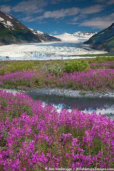 SPENCER GLACIER, CHUGACH NATIONAL FOREST,ALASKA