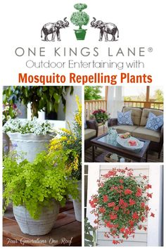 Decorating + entertaining with mosquito repelling plants. I had no idea that certain lush beautiful plants repelled mosquitos! @Mandy Dewey Generations One Roof #sp