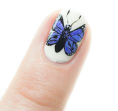 Butterfly in the Polish