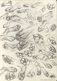 4 Ridiculous Tips Can Change Your Life: Cat Breeds World cat anatomy poster. Dog Paw Drawing, Furry Drawing, Animal Sketches, Animal Drawings, Art Sketches, Dog Anatomy, Wolf Sketch, Art Reference Poses, Dog Paws
