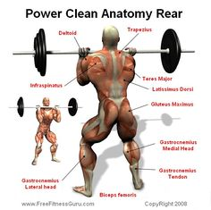 Power Training, Weight Training, Strength Training, Exercise Physiology, Anatomy And Physiology, Power Clean Workout, Barbell Lifts, Fitness Binder, Ab Day