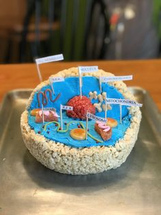 Edible Model of an Animal Cell for grade Life Science. Made by Carson. Plant Cell Project Models, 3d Animal Cell Project, Edible Cell Project, Cell Model Project, Cell Project Ideas, 3d Animal Cell Model, 3d Cell Model, 3d Plant Cell, Plant Cell Model